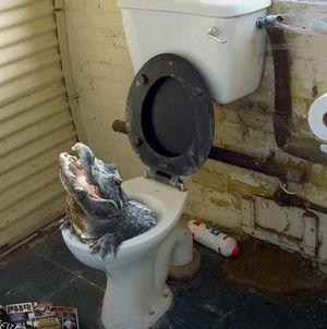 unclogging-toilet-is-sometimes-a-problem