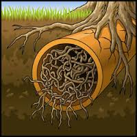 Sewer Backups from Tree Roots