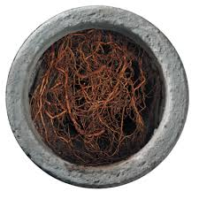 tree-roots-in-Sewers_pipe