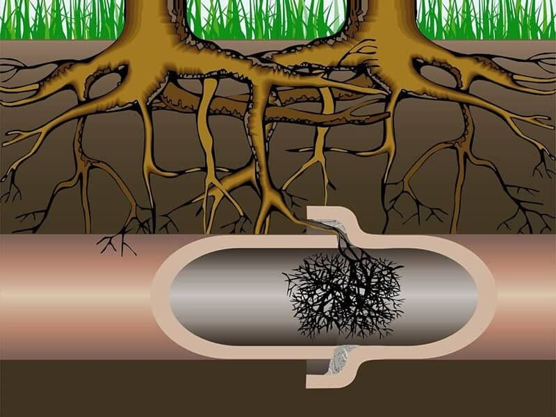 tree-roots-backed-up-drain-pipe