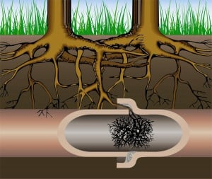 remove roots in drain pipes